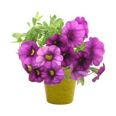 PETUNIA FLOWER POT in Beige