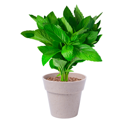 HERB POT SET with 2 Biodegradable Flower Pots